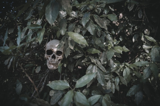 Düsterer schädel, der von den pflanzen hervorsteht
