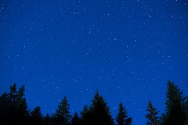 Dunkelblaue nachtkiefern über dem himmel mit vielen sternen. hintergrund der milchstraße Premium Fotos