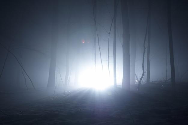 Dunkelblauer gruseliger wald mit bäumen im nebel niemand