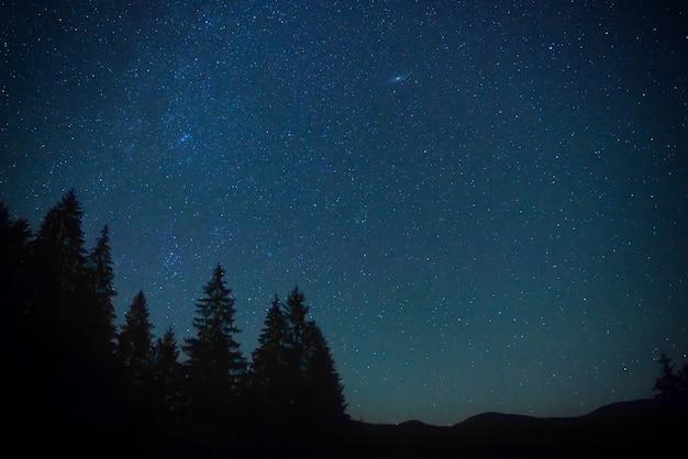 Dunkelblauer nachthimmel über dem geheimnisvollen wald mit pinien