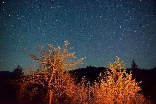 Dunkelblauer nachthimmel über dem mysteriösen herbstwald mit orangenbäumen