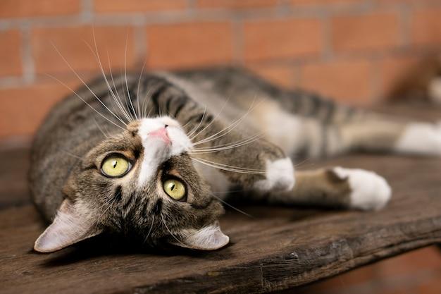 Dunkelgraue katze, die auf dem tisch liegt