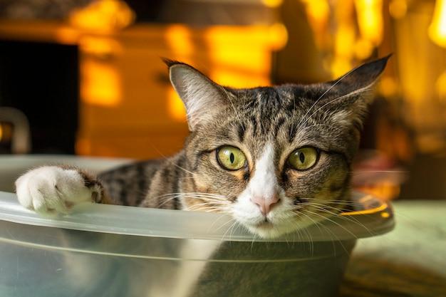 Dunkelgraue katze, die in einem kleinen blatt liegt