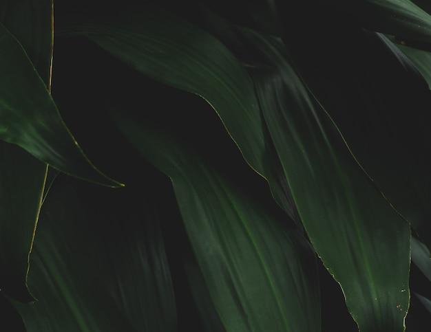 Dunkelgrüne blätter im regenwaldnaturhintergrund