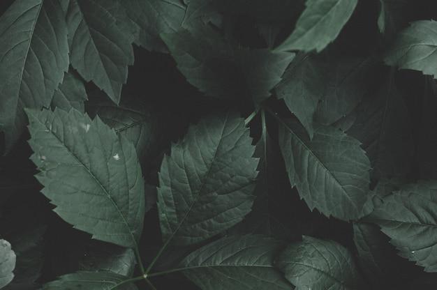 Dunkelgrüne blätter