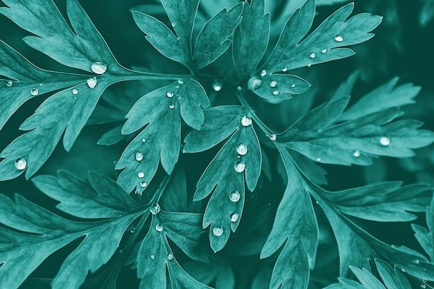 Dunkelgrüne pflanzenblätter mit wassertropfen