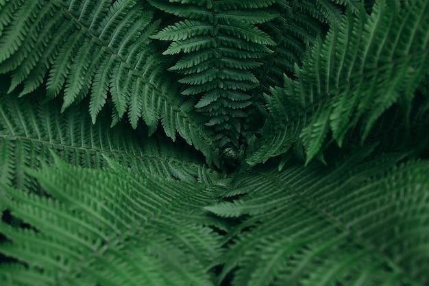 Dunkelgrünes frisches farn-nahaufnahmehintergrundmuster