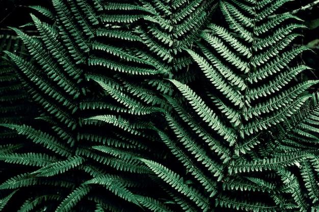 Dunkelgrünes tropisches mit copyspace. natürlicher blattfarn. farnblatt im dschungel. abstrakte textur.
