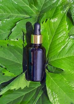 Dunkle flasche mit schönheitsprodukten: gesichtsserum oder körperöl zwischen grünen blättern.
