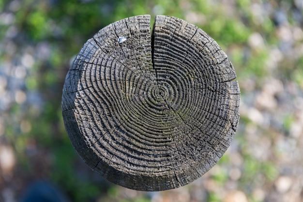 Dunkle holzscheibentextur. alte zaunplatten mit naturpark