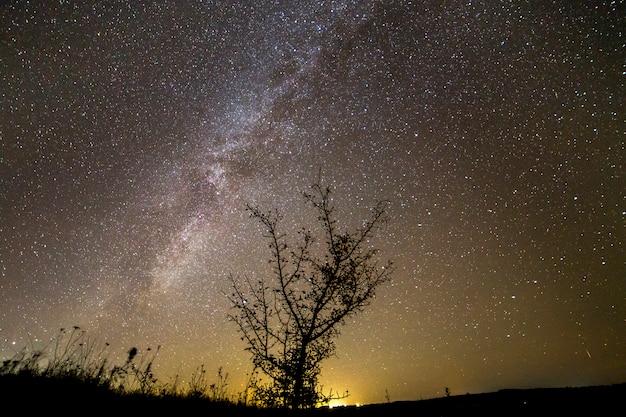 Dunkle kontrastschattenbild des baumes auf dunklem sternenhimmel, milchstraßengalaxie und entferntem horizont