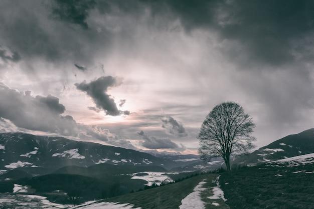 Dunkle landschaft mit einem baum