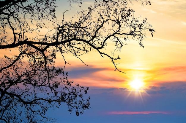 Dunkle silhouette eines baumes auf einem hintergrund des hellen himmels während des sonnenuntergangs