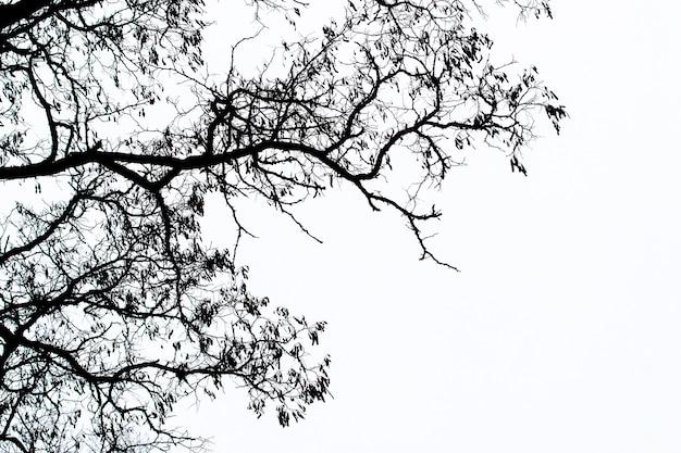 Dunkle silhouette eines baumes auf einem hintergrund des hellen himmels
