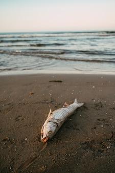 Durch verschmutzung am mittelmeerstrand getötete fische.