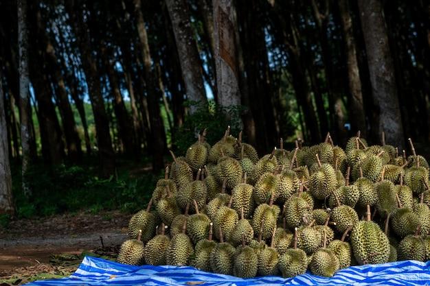 Durian aus südthailand ist in china sehr beliebt.