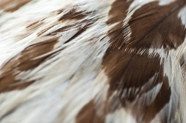 Eagle feathers nahaufnahme