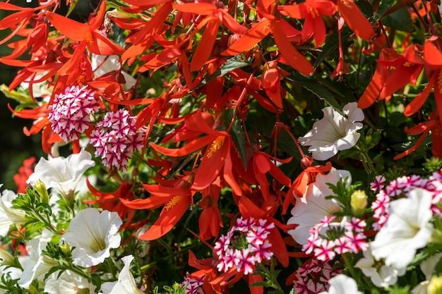 East grinstead in voller blüte