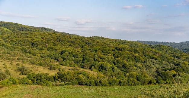 Ebene mit bäumen und wiese