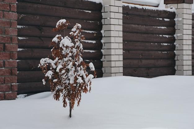 Eberesche im schnee nahe dem zaun. baum mit schnee bedeckt.