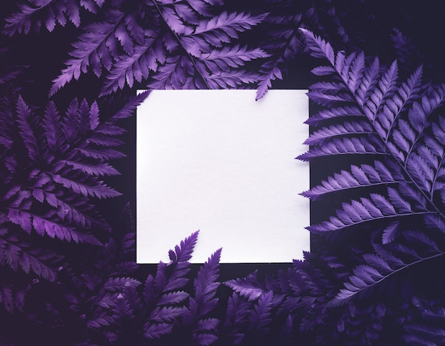 Echte farnblätter mit exotischer farbe und weißem kopierraumhintergrund. naturkonzeptentwurf.