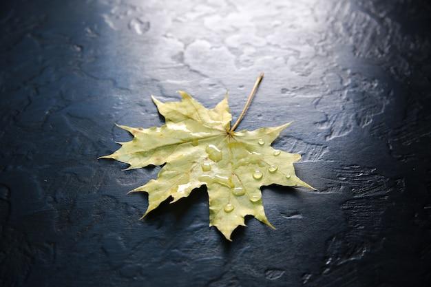 Echte herbstblätter liegen in regentropfen auf schwarzem hintergrund. saisonales foto. gelbe und grüne farben mit textur. november-postkarte.