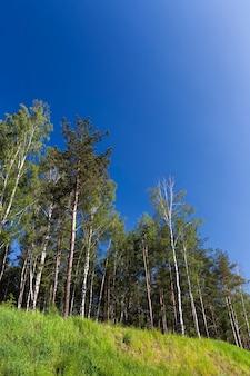 Echte natur mit bäumen und gras im sommer