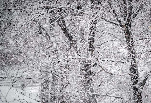 Echter schnee fällt. natürliche winterwaldbäume