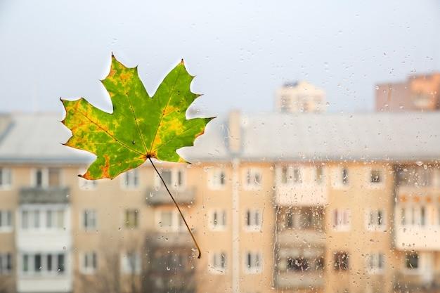 Echtes herbstlaub am fenster. saisonales foto. gelbe und grüne farben mit textur. november-postkarte. transparenter hintergrund. schöne aussicht auf die stadt.