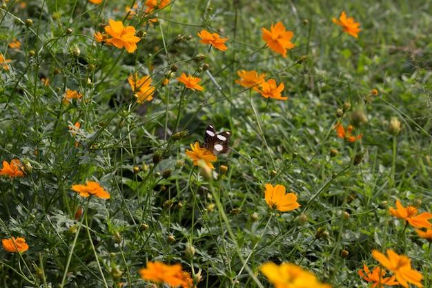 Eggfly butterfly sitzt unter den blumen in seinem natürlichen lebensraum