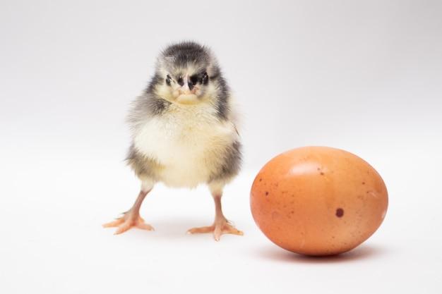 Ei und huhn auf weißem hintergrund. weicher fokus.