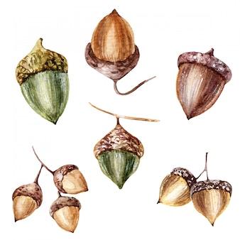 Eichelkollektion herbst