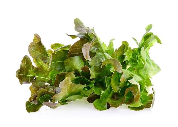 Eichenblattsalat isoliert auf weißem hintergrund