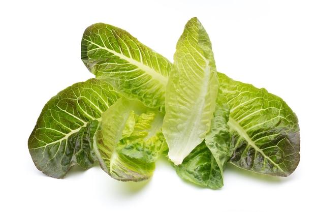 Eichenblattsalat lokalisiert auf weiß.