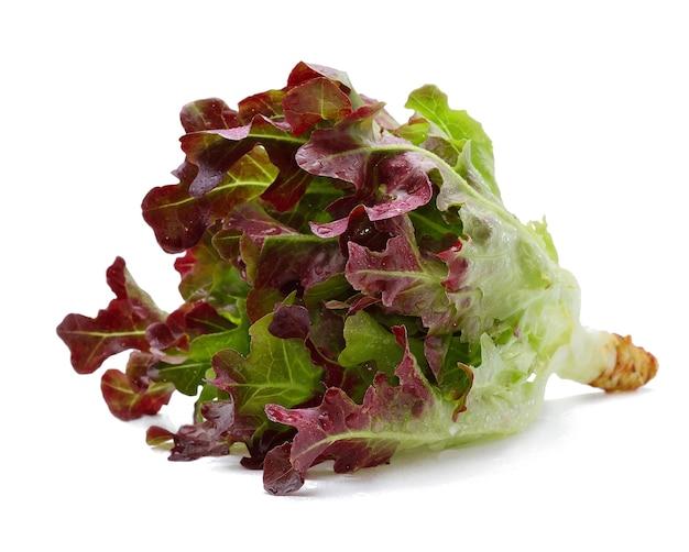 Eichenblattsalat mit wassertropfen lokalisiert auf weißem hintergrund.