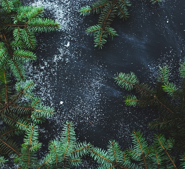 Eichenzweige auf schwarzem hintergrund
