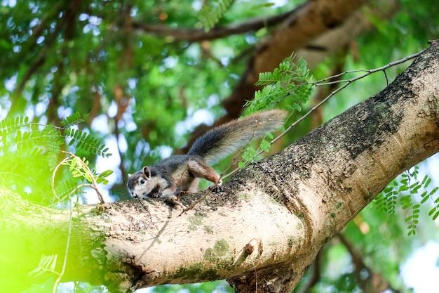 Eichhörnchen auf dem baum, der versucht, bananen und früchte im korb zu essen