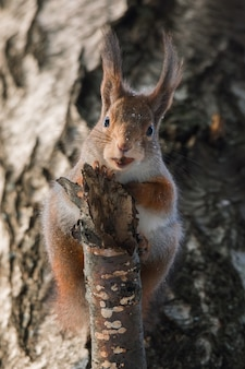 Eichhörnchen auf dem baum im winter