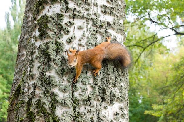 Eichhörnchen auf einem ast