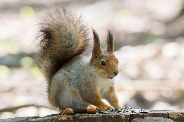 Eichhörnchen auf einem baum