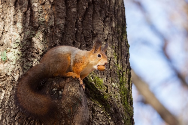 Eichhörnchen auf einer niederlassung im herbst