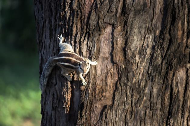 Eichhörnchen oder nagetier oder auch bekannt als chipmunk, auf dem boden