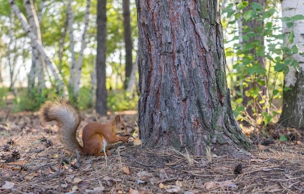 Eichhörnchen sitzt nahe baum und isst eine nuss.