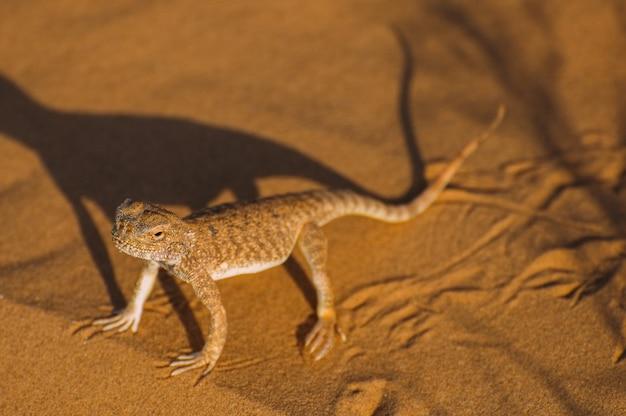 Eidechse in der wüste auf dem gelben sand. reptil in der wüste