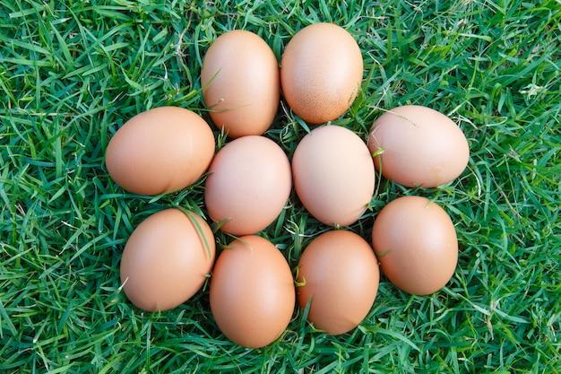 Eier im grünen gras