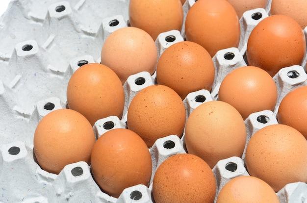 Eier in der papierbehälterplatte