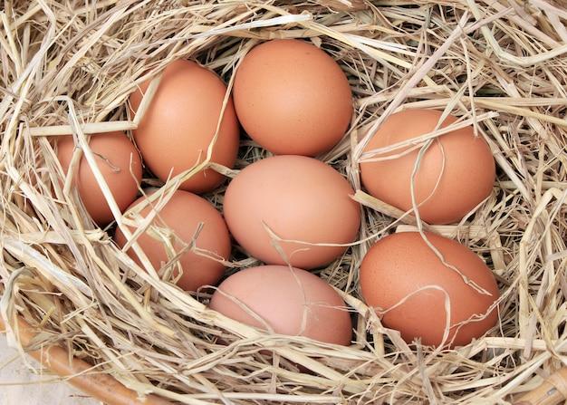 Eier / korb mit eiern im stroh
