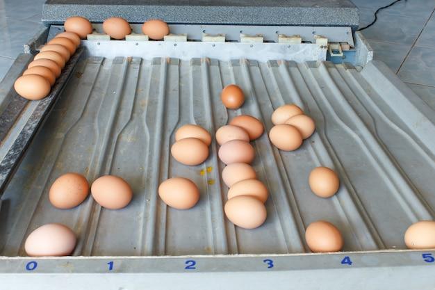 Eier sortieren