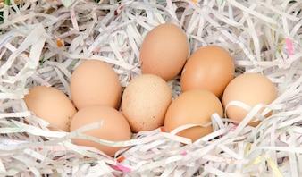 Eier zum Kochen