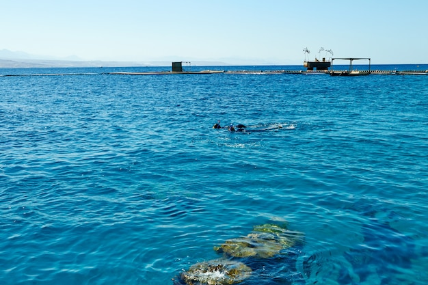 Eilat-israel 8. september 2018. delfinriff am roten meer.